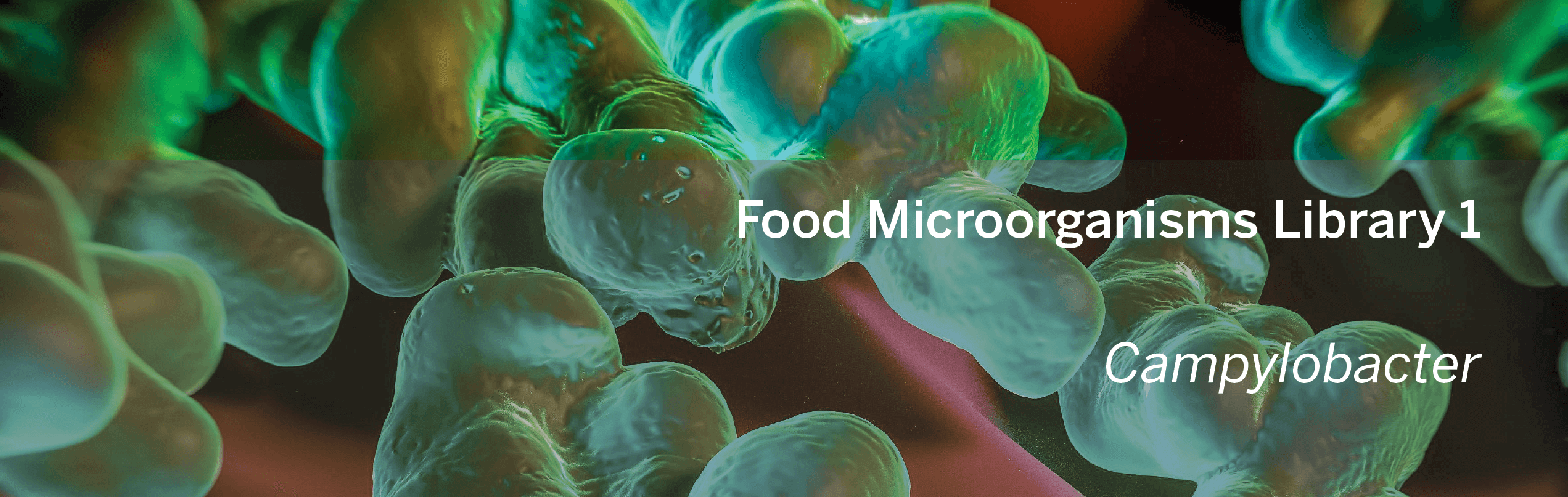 MOL0032005_Microorganisms Library_Campylobacter_banner.png