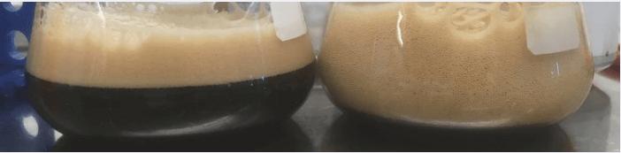 Beer spoilage organism