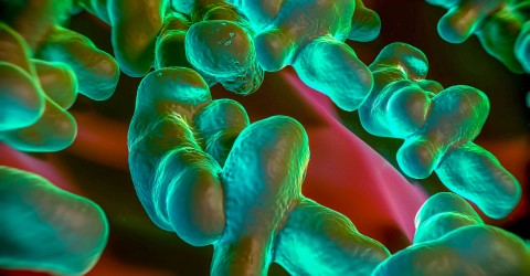 BIOMERIEUX-INDUSTRY-FOOD-PATHOGEN-CAMPYLOBACTER