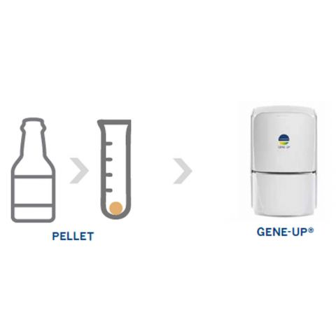 GENE-UP BREW solution